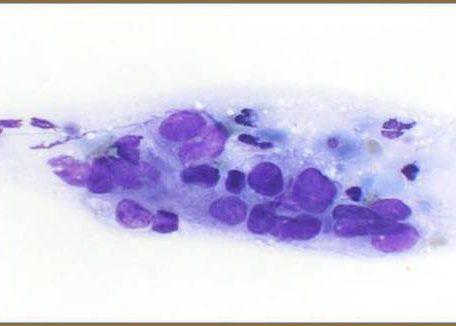 Poroid cells